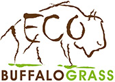 Eco Buffalograss