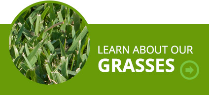 Learn about our grasses