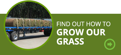 Find out how to grow your grasses